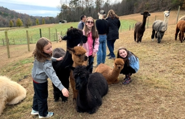 Alpaca group girls